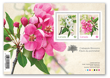 Souvenir sheet of 2 stamps - Crabapple Blossoms